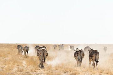 Zebra in Etosha, Namibia von Simone Janssen