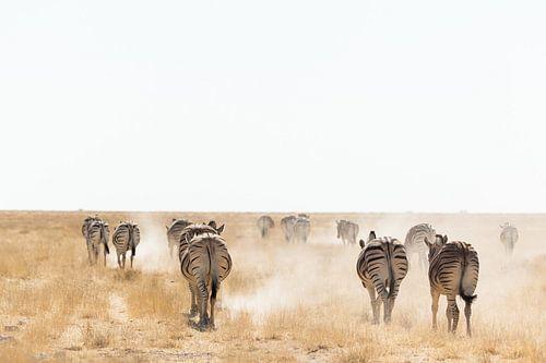 Zebra's in het stof