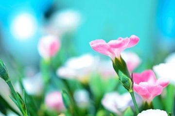 Rosa Blume von Bente Teertstra