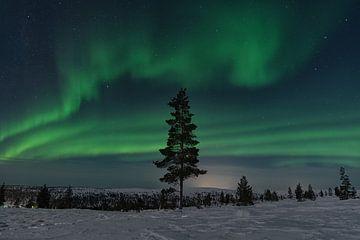 noorderlicht in Finland lapland. met een boom op de voorgrond. van Robin van Maanen