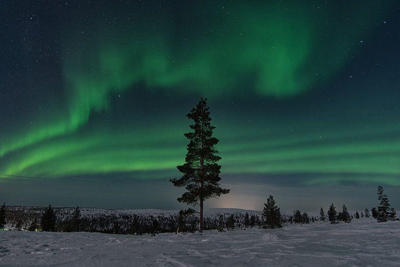 nordlicht in finnland lappland. mit einem baum im vordergrund. von Robin van Maanen
