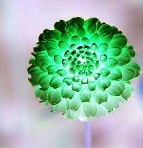Flower in the rain van Pauli Langbein