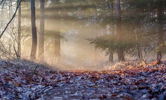 Verlicht pad van Bas Van der Swaluw
