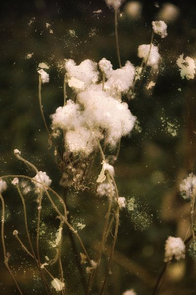 Herfst tijd - na de bloei van Christine Nöhmeier