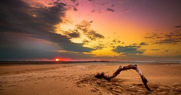 Drijfhout op het strand van Johan Strijckers