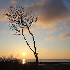 murmureur de vent sur Ostsee Bilder