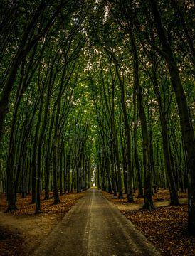 Wald von Kelly Bernaards