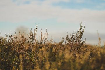 Ermelosche Heide van Rianne Hazeleger