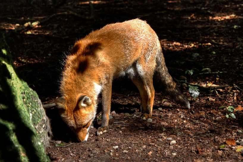 Fox van BL Photography