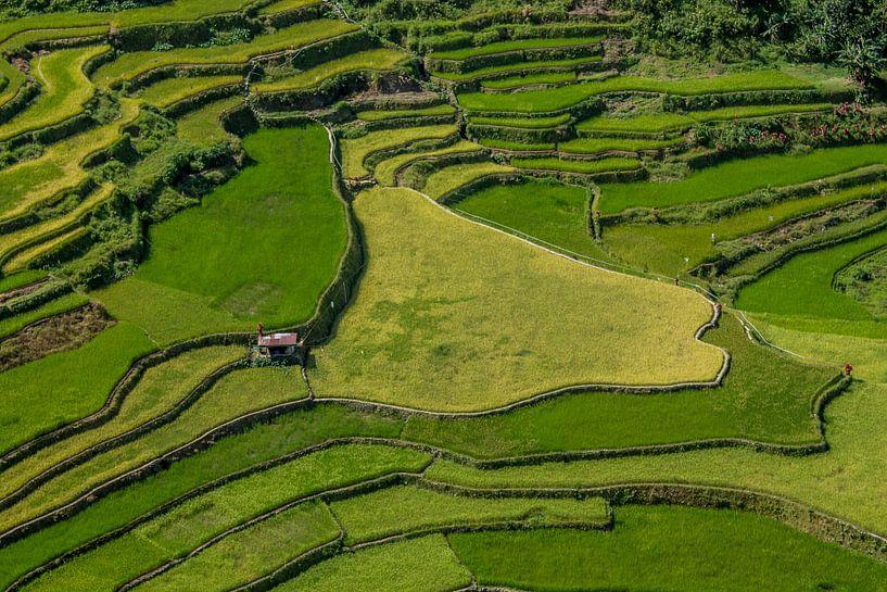 Ricefields in the Philippines von Hans Moerkens