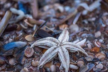 Seestern am Strand von Scheveningen von Remco-Daniël Gielen Photography