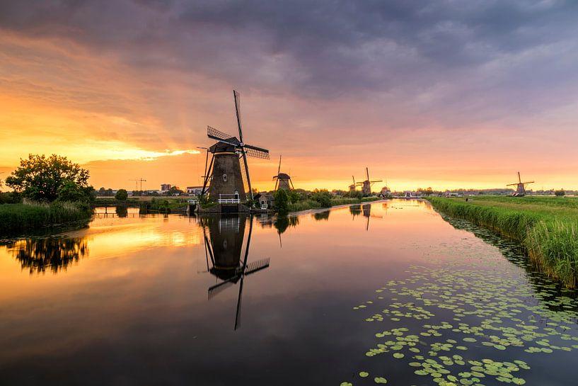 Harps van Jan Koppelaar