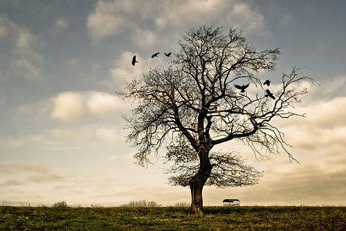 A quiet autumn afternoon von Harry van Rhoon