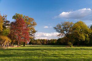 Kleurige bomen tegen blauwe lucht