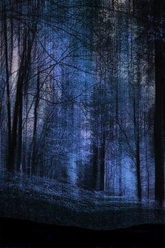 forêt de nuit sur Christine Nöhmeier