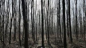 Door de bomen het Bos zien van