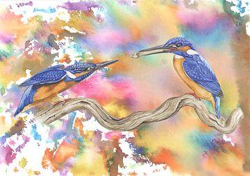 Kleurrijke ijsvogels van Jasper de Ruiter