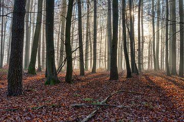 Sonne durchdringt den Nebel von Uwe Ulrich Grün