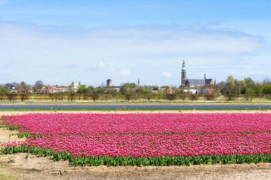 Roze tulpen in Lisse van Michel van Kooten