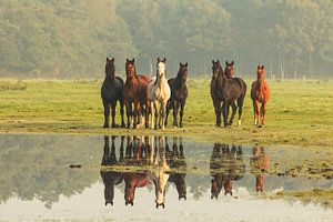 Nieuwsgierige paarden