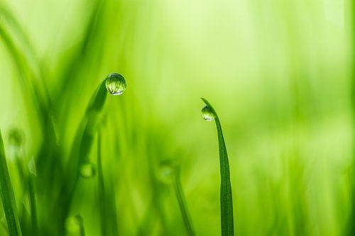 In een groen groen land von Irene Lommers