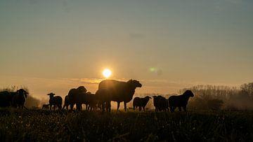 Moederschaap in de ochtend van Koen Leerink