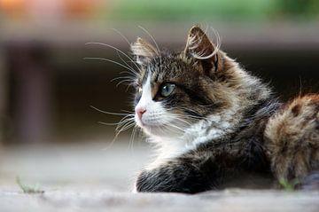 pussycat van Dirk van Egmond