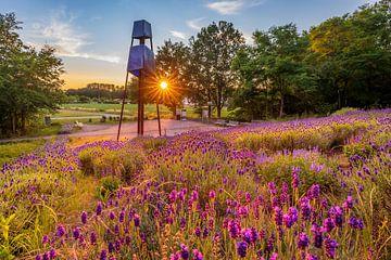 Lavendel op de slakkenberg Groot hout van Frank Heldt