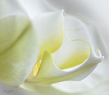 Witte orchidee ( Phalaenopsis orchid) van Flower and Art