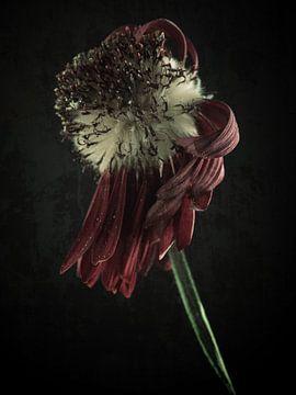 Verwelkte Schönheit von Andreas Berheide Photography