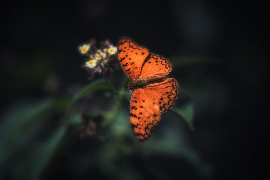 Oranje vlinder op bloem