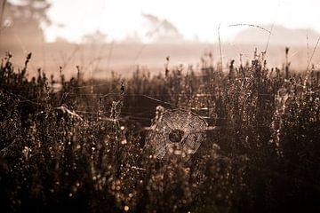 Toile d'araignée sur le Veluwe sur Ellis Peeters