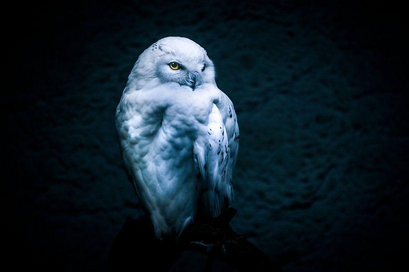 Snow owl van Mark Zanderink