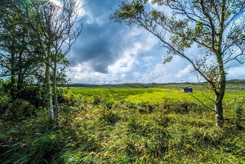 Bäume und Wiesen auf Terschelling von Fred Leeflang