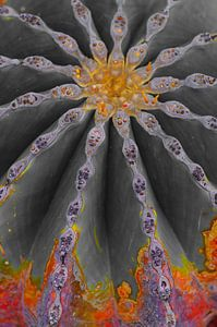 Kaktus in Flammen von De Rover