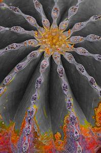 Kaktus in Flammen