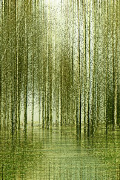 Birkenwald van Violetta Honkisz