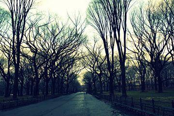 Central Park van Bo Wijnakker