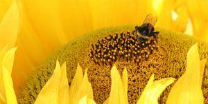 bij op gele zonnebloem van