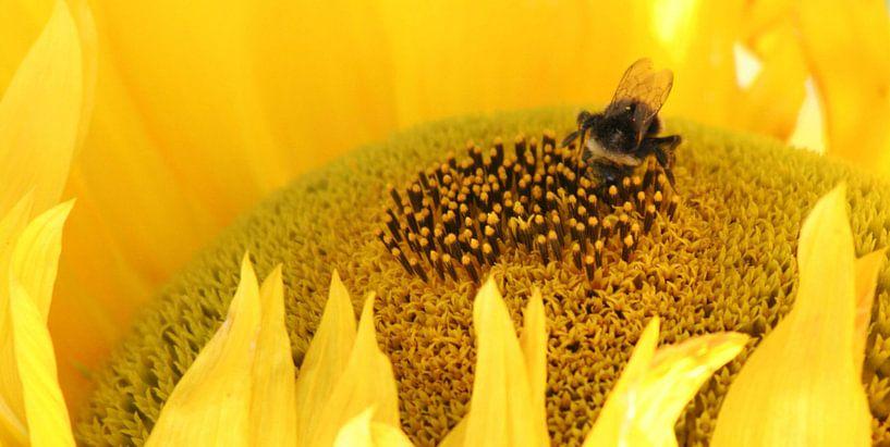 bij op gele zonnebloem van Martijn Wams