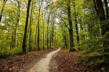 der Weg im Wald von Nadine Rall