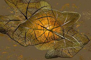 Caladium Pflanze 3 Digital Art von Alie Ekkelenkamp