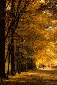 Herfst kleuren in het bos