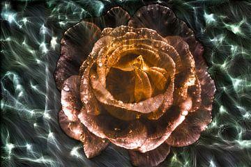 Kirlian Feldaufnahme einer Rose in Nahaufnahme