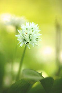 Groen wit delicate kleuren van de lente van Tanja Riedel