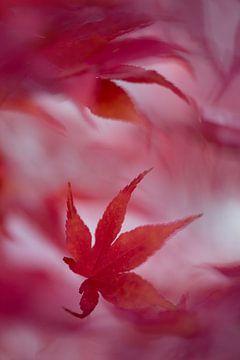 feuille d'automne rouge sur gj heinhuis