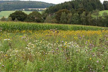 Diemelsee Landschap met bloemen, Duitsland von Jaap Mulder