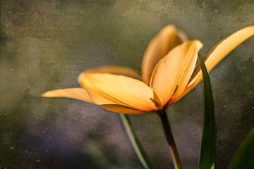 Vintage dekoriert Mini Tulpe von KB Design & Photography (Karen Brouwer)