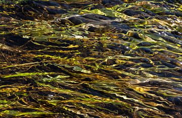 Wasserpflanzen im Gebirgsbach