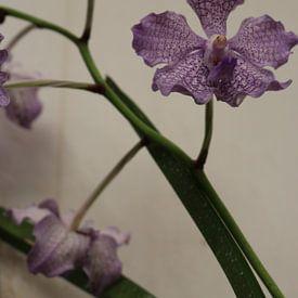 bloem  van Wilma Hage